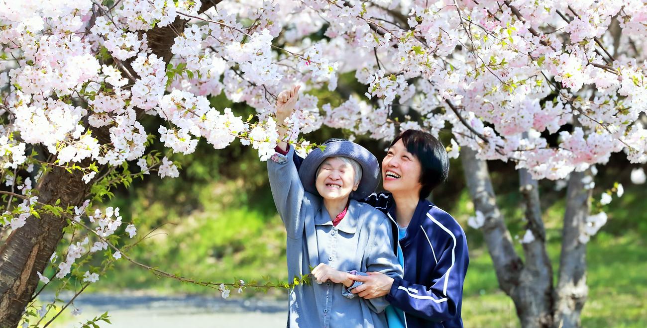 利用者と職員が桜に触れる様子